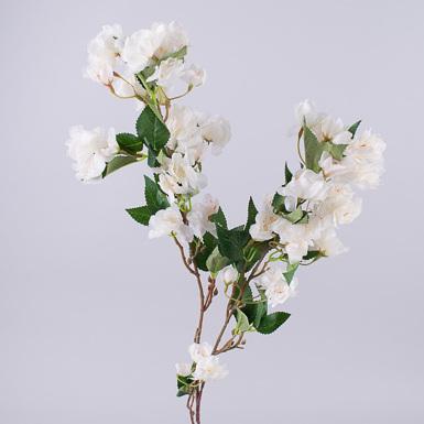 цветы груши белый