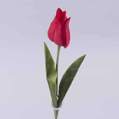 """Тюльпан """"алладин"""" красный"""