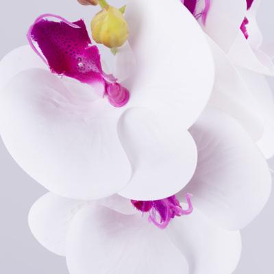 орхидея двойная с листьями бело-розовая