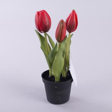 тюльпан латексный в горшке красный