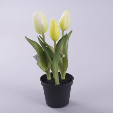 тюльпан латексный в горшке белый