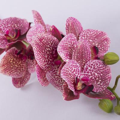 """орхидея латексная """"средняя пастель"""""""