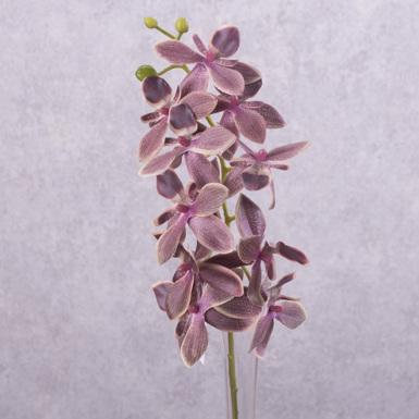 """орхидея """"остролистая"""" фиолетовая"""