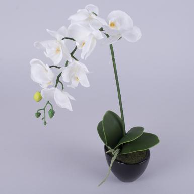 орхидея одинарная латексная  в кашпо белая