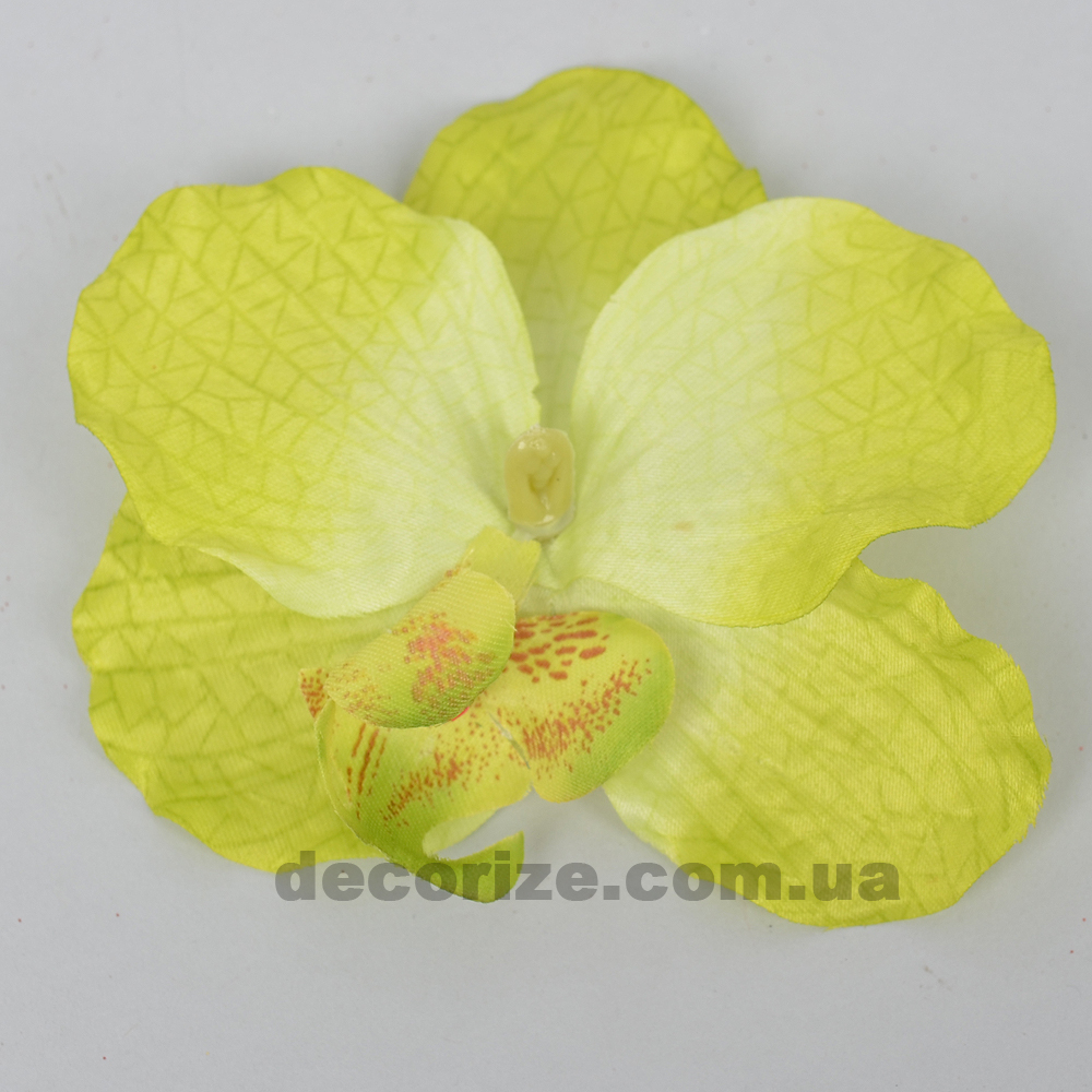 головка орхідеї салатова