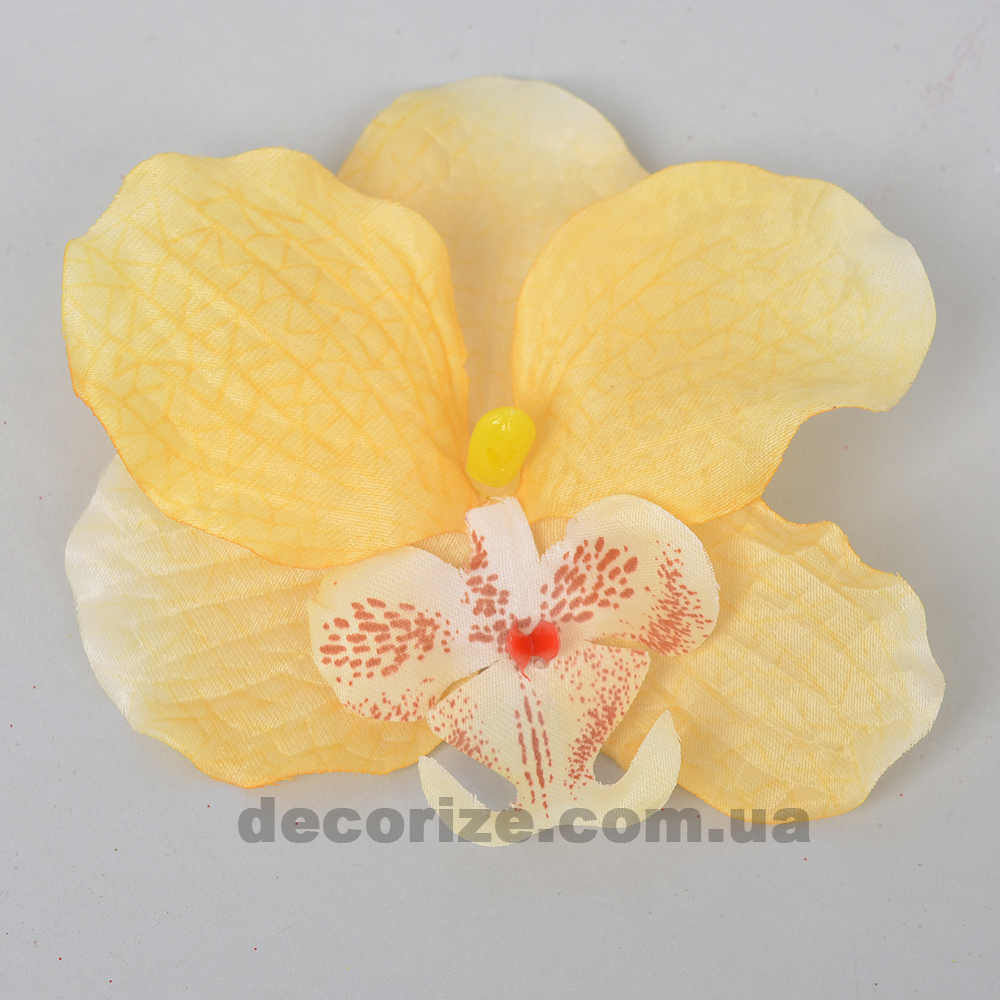 головка орхідеї світло жовта