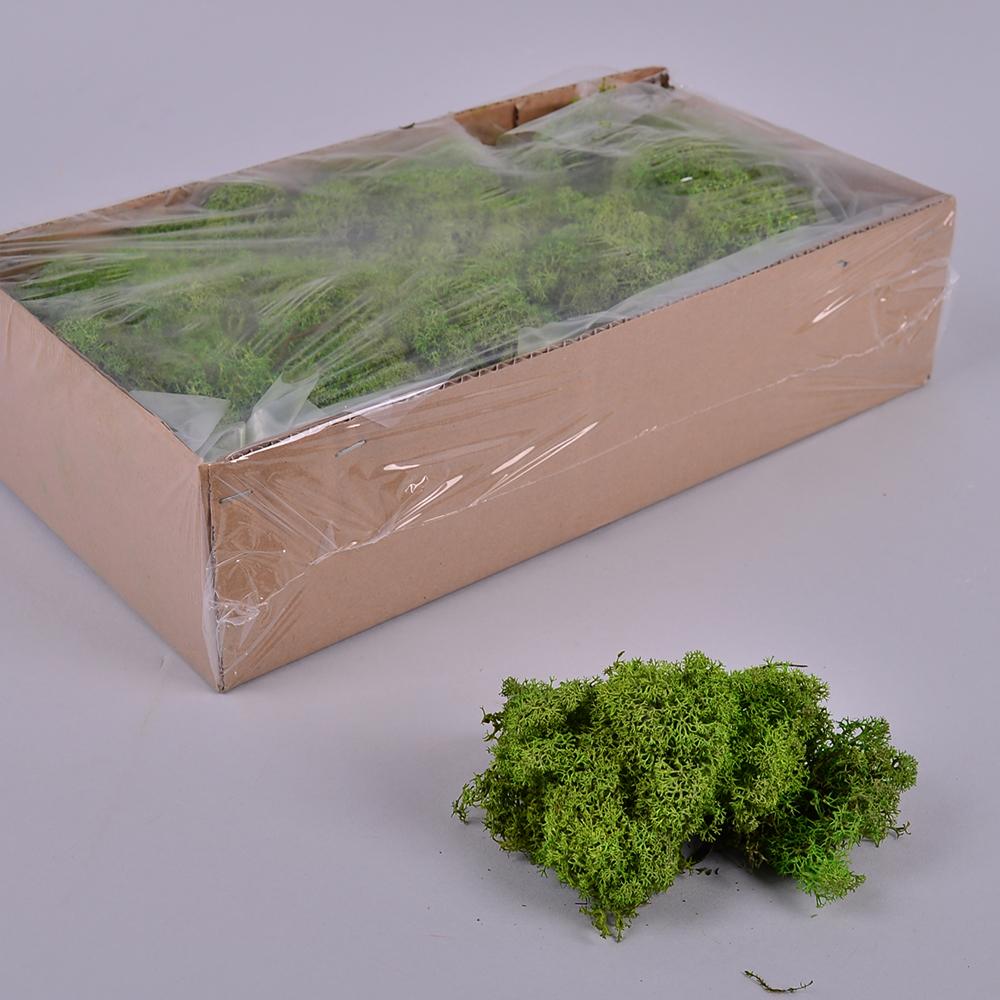 мох стабилизированный в упаковке зеленый 500 гр