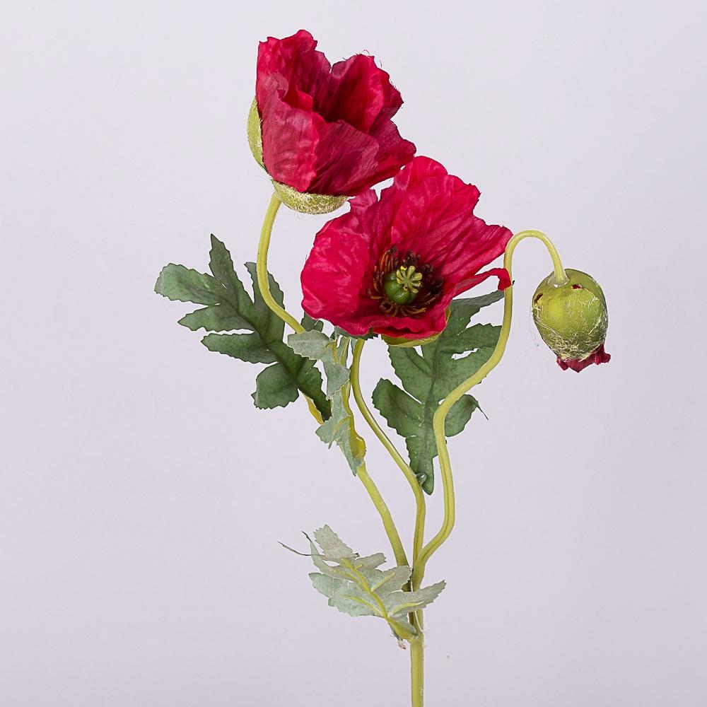 Мак 2 квітки і бутон