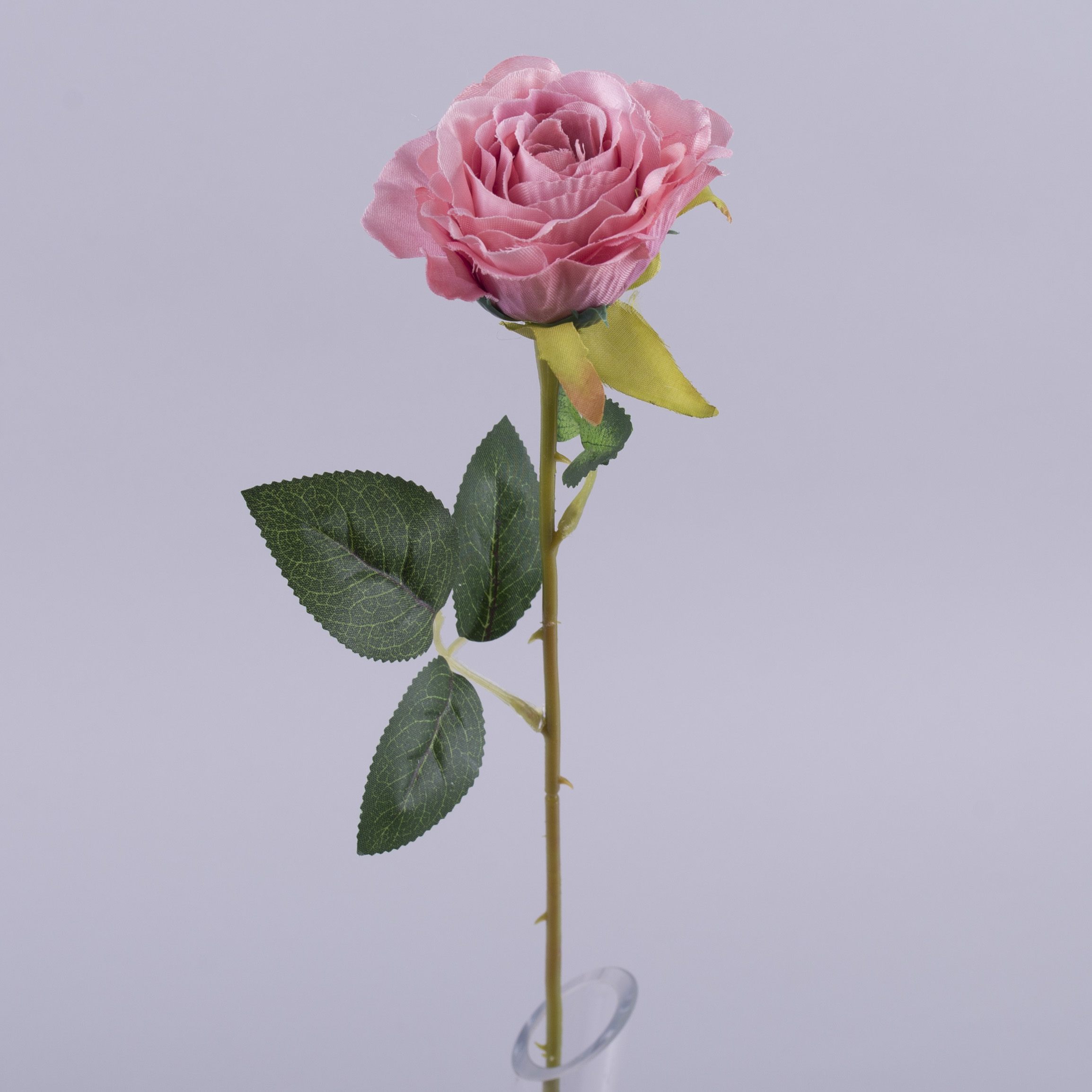 Роза одинарная розовая