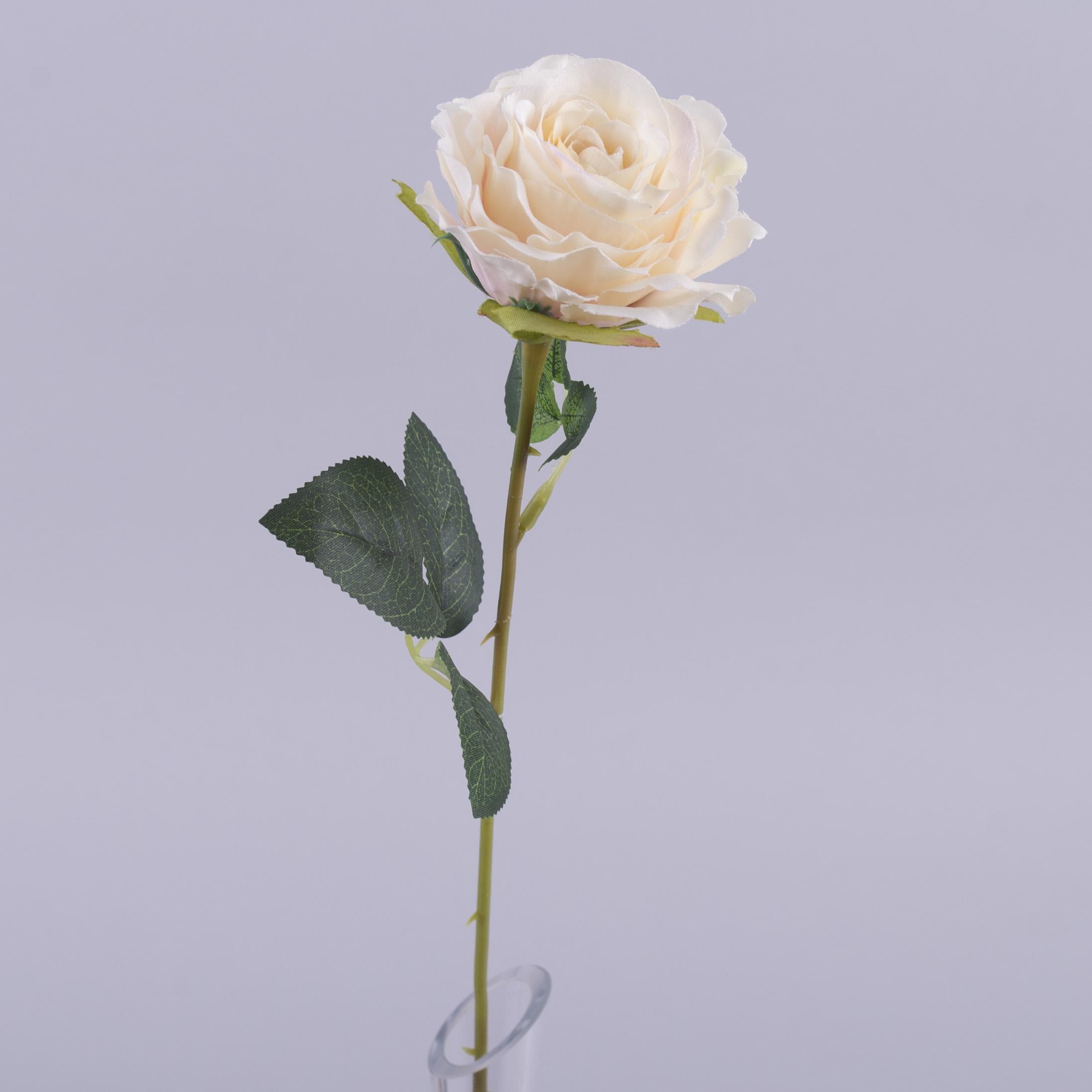 Роза одинарная персиковая