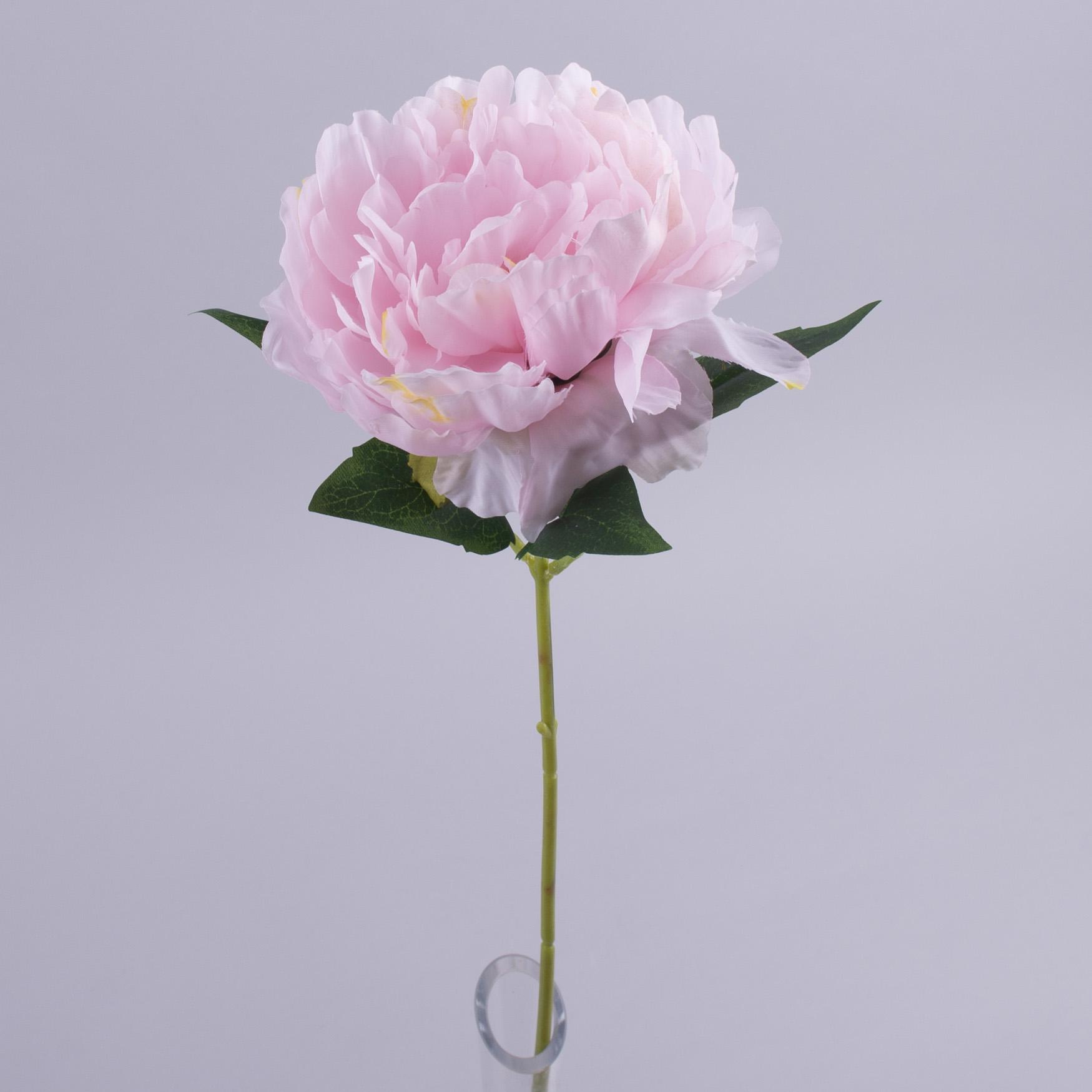 Пион одинарный нежно розовый