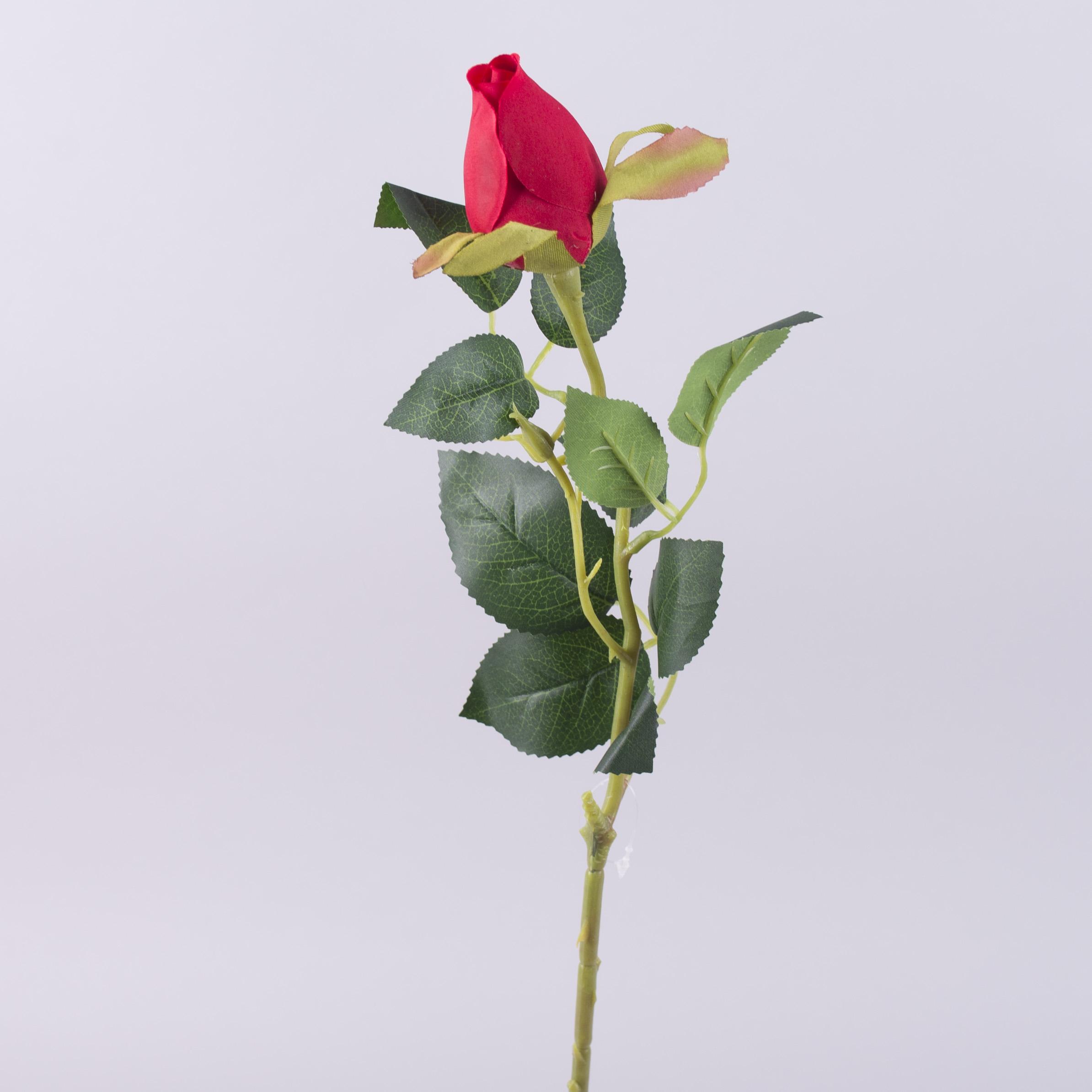 роза с закрытым бутоном красная