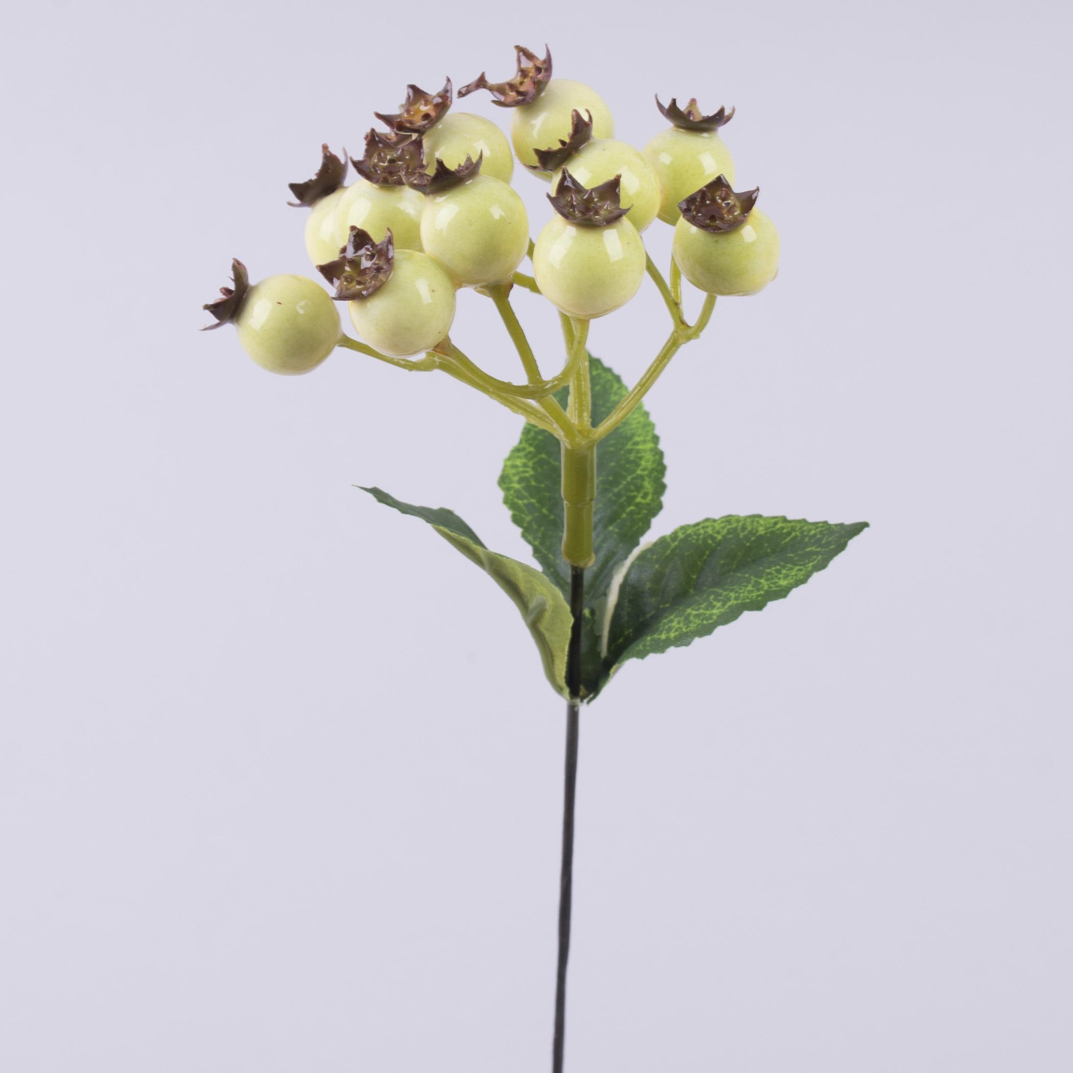 ветка ягоды шиповника кремовые