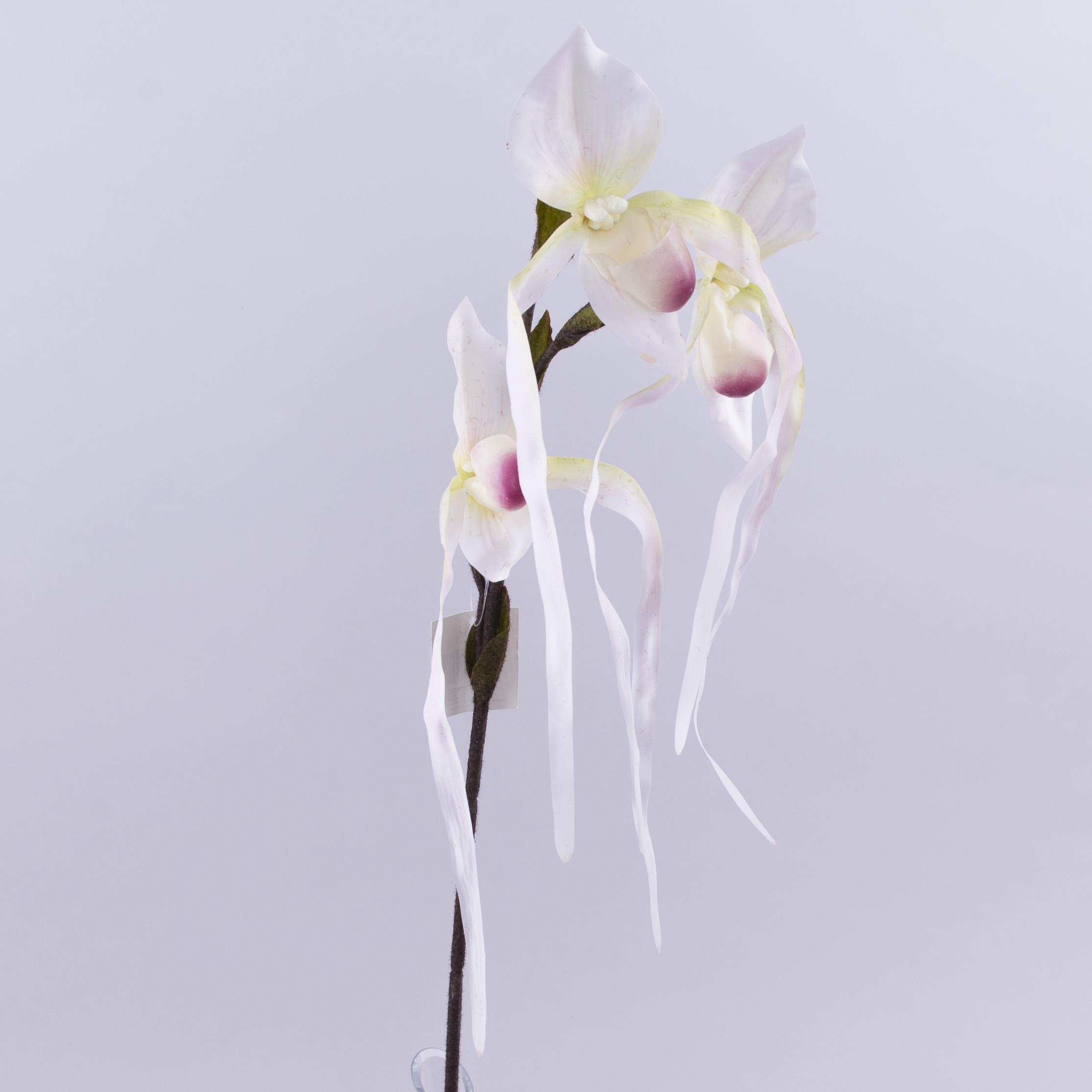 квіти орхідея тигрова звисаюча біла