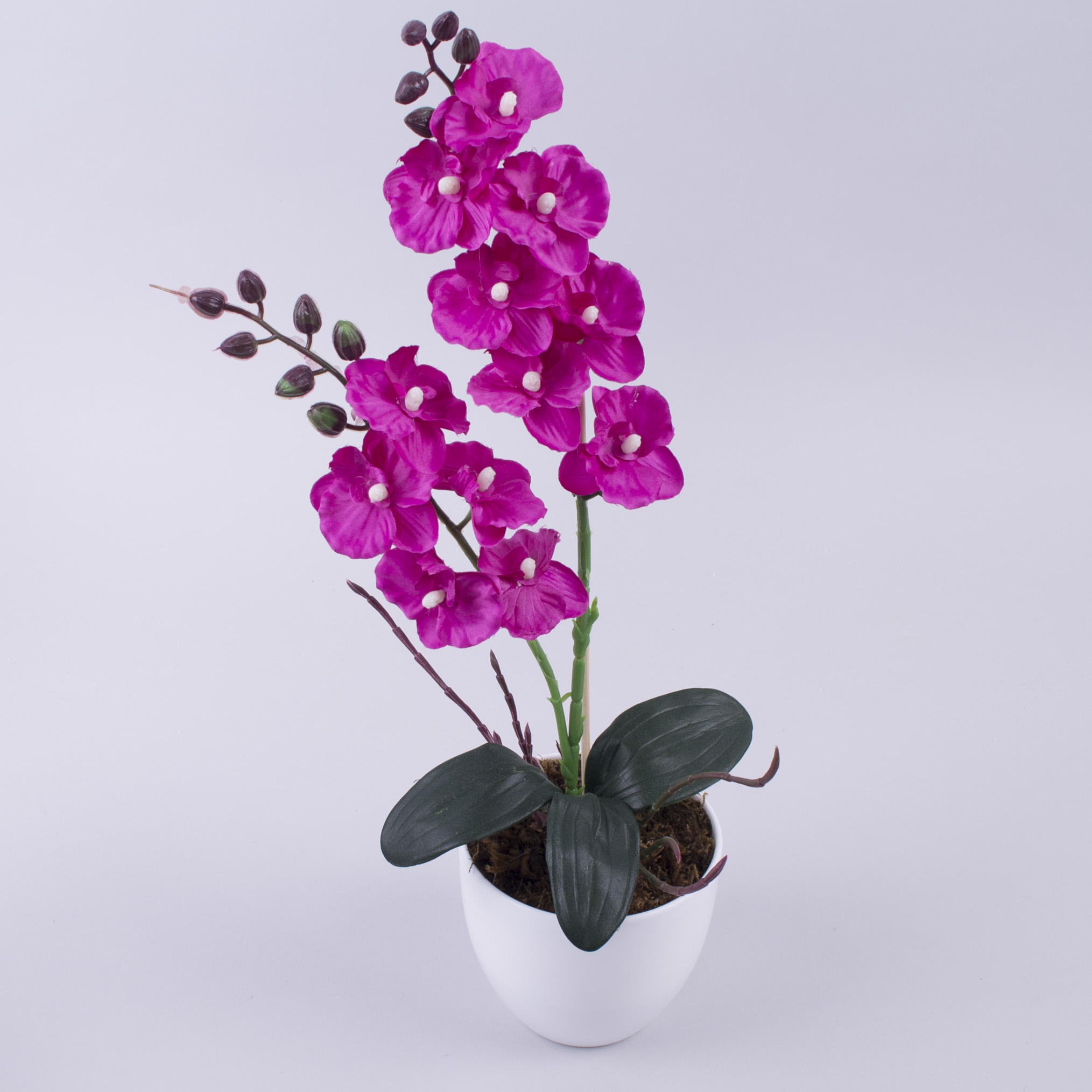орхідея міні в горшку (малинова)