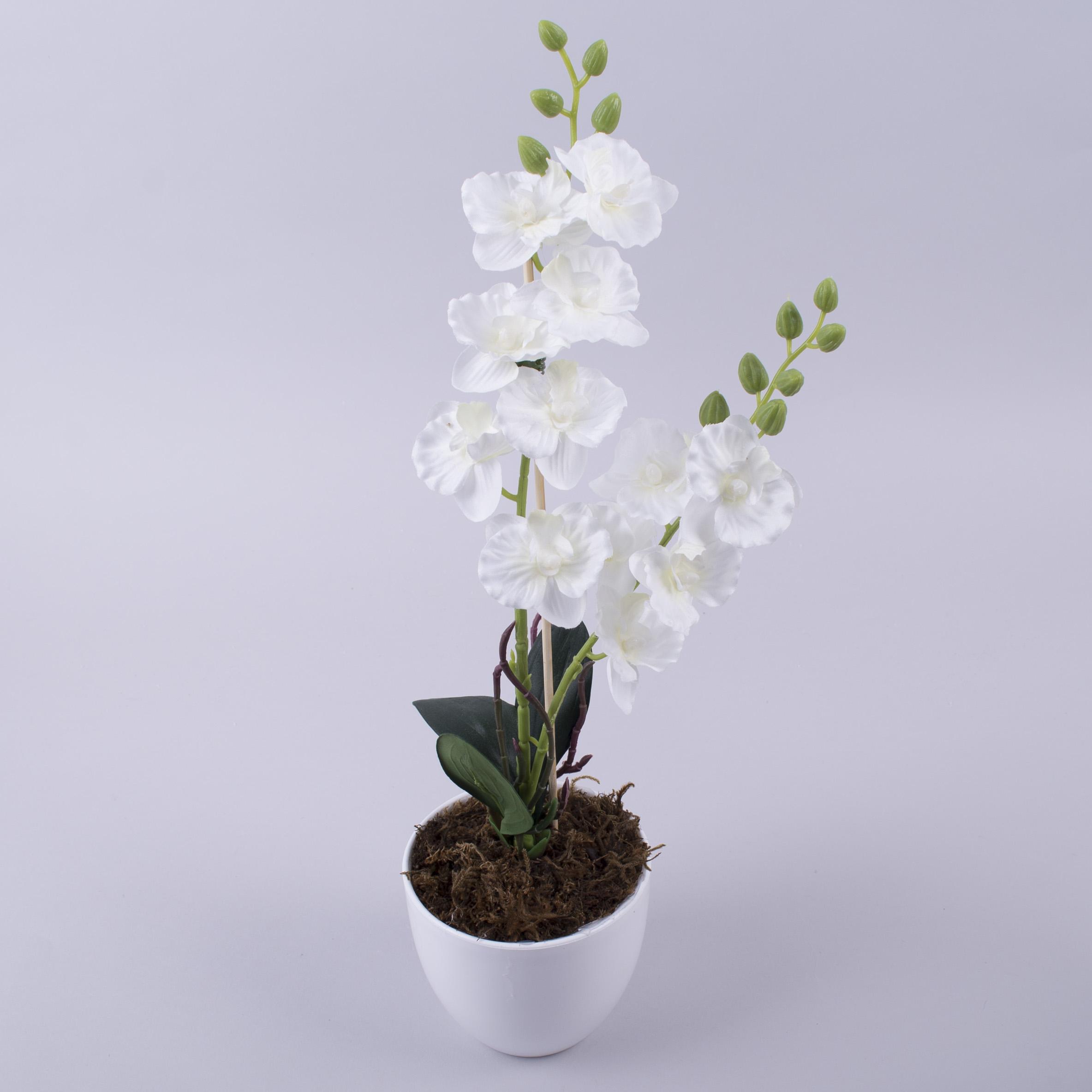 орхідея міні в горшку (біла)
