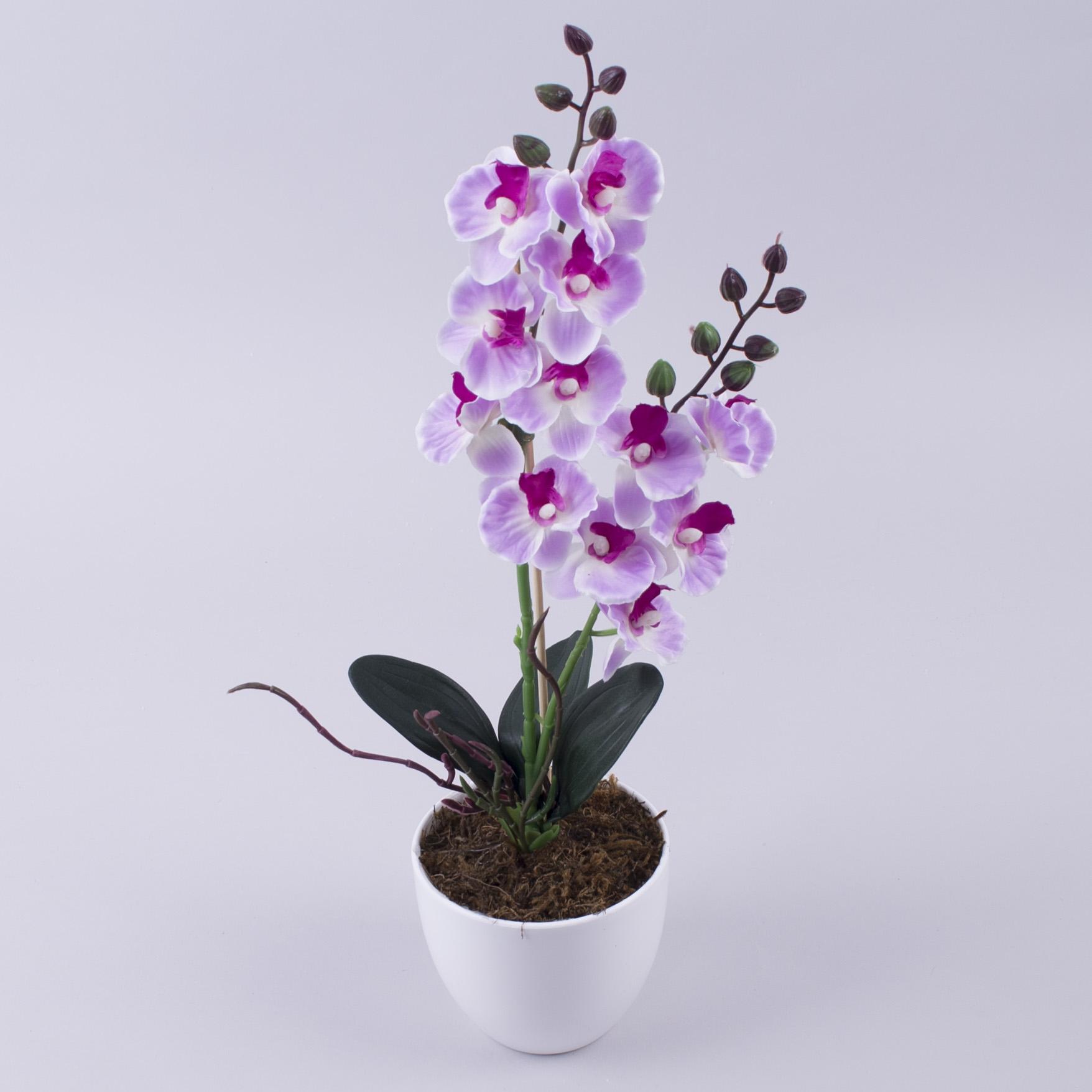 орхідея міні в горшку (бузкова)