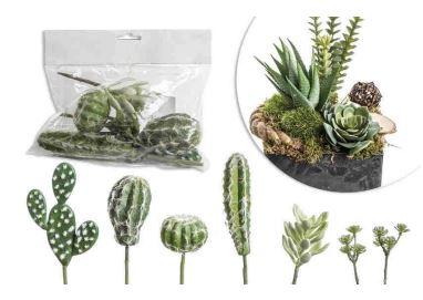 суккуленты в наборе (кактусы ) (6 шт)