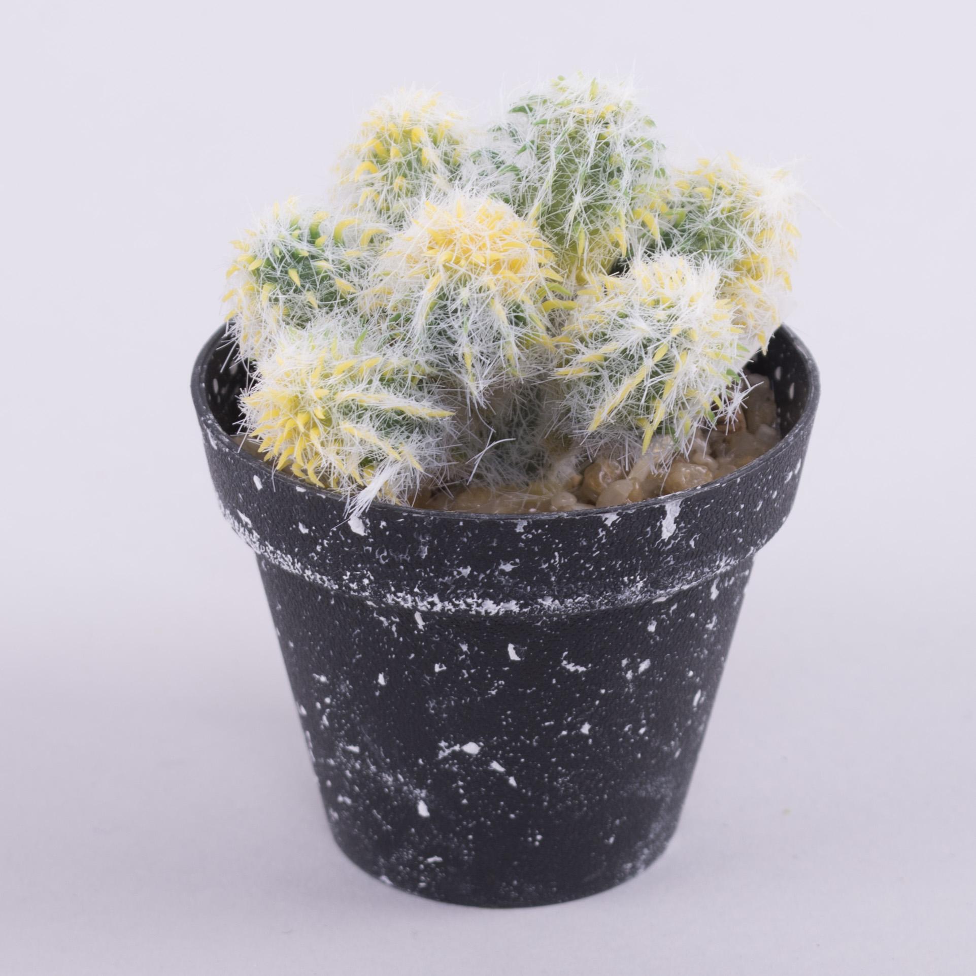 кактус в черном горшке