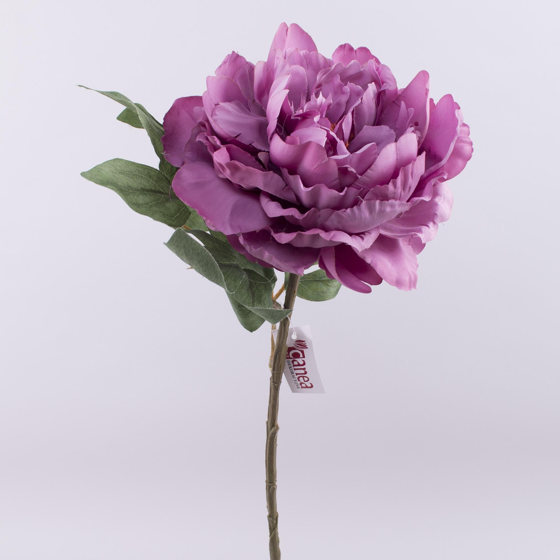 пион одинарный пышный фиолетовый
