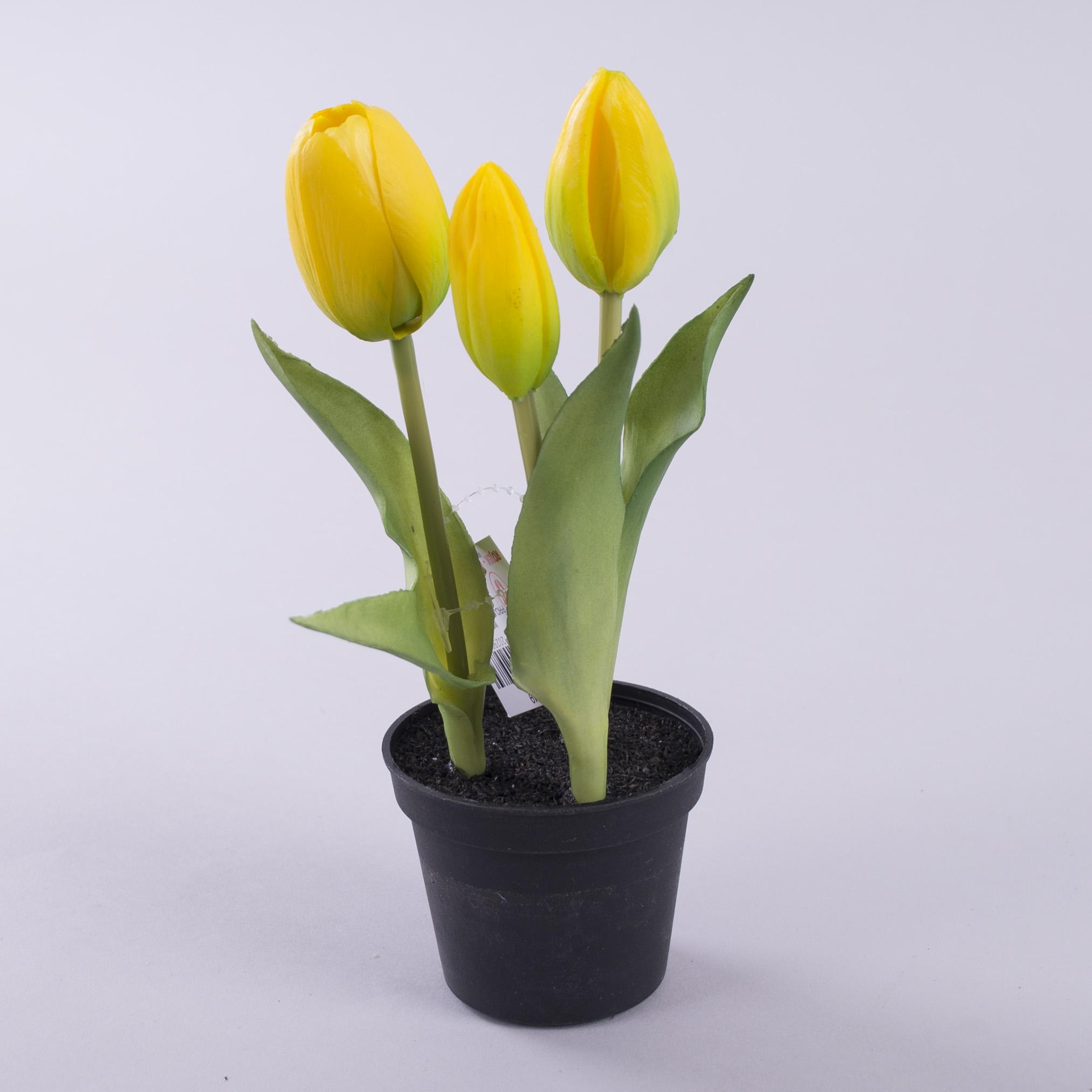 тюльпан латексний в горщику жовтий