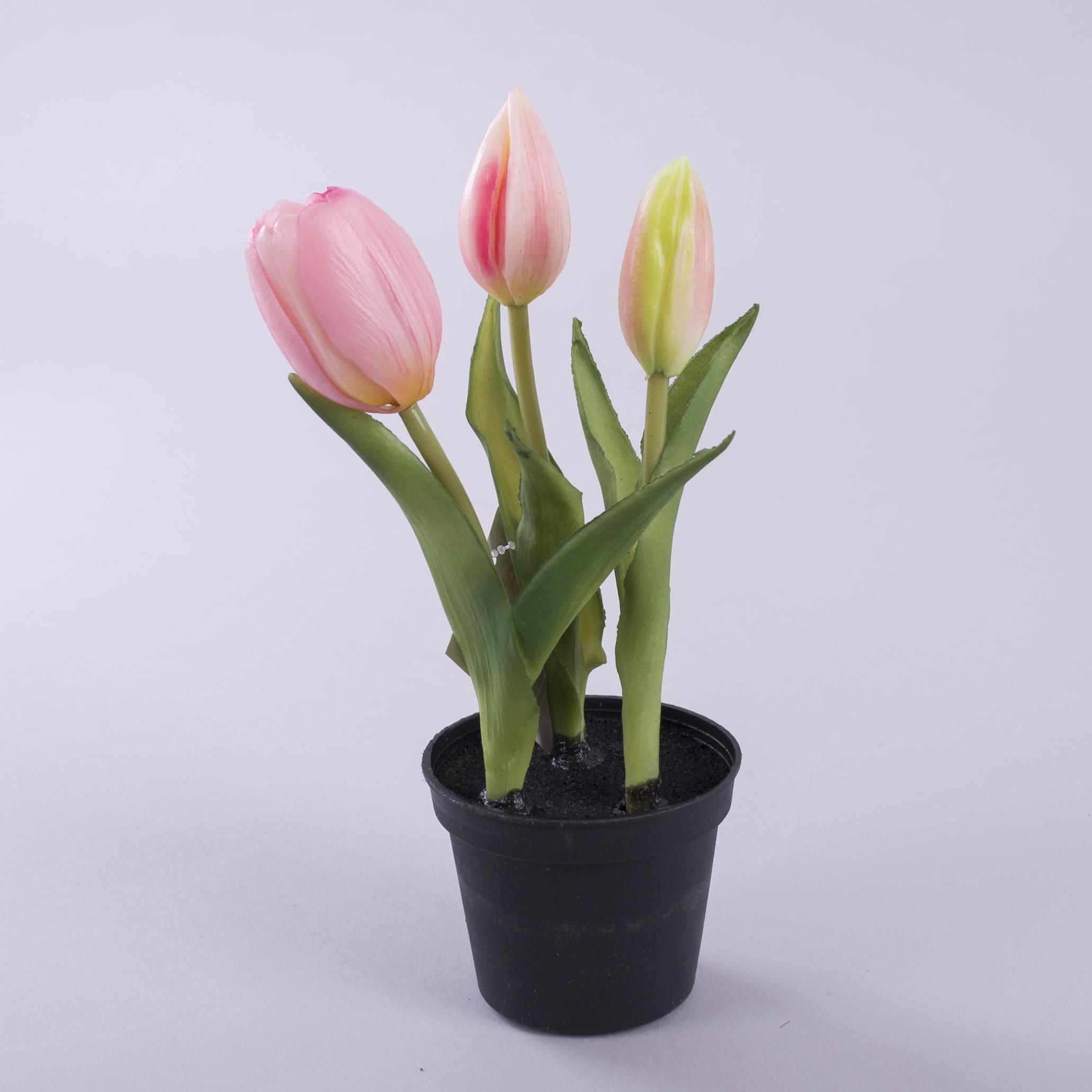 тюльпан латексний в горщику рожевий