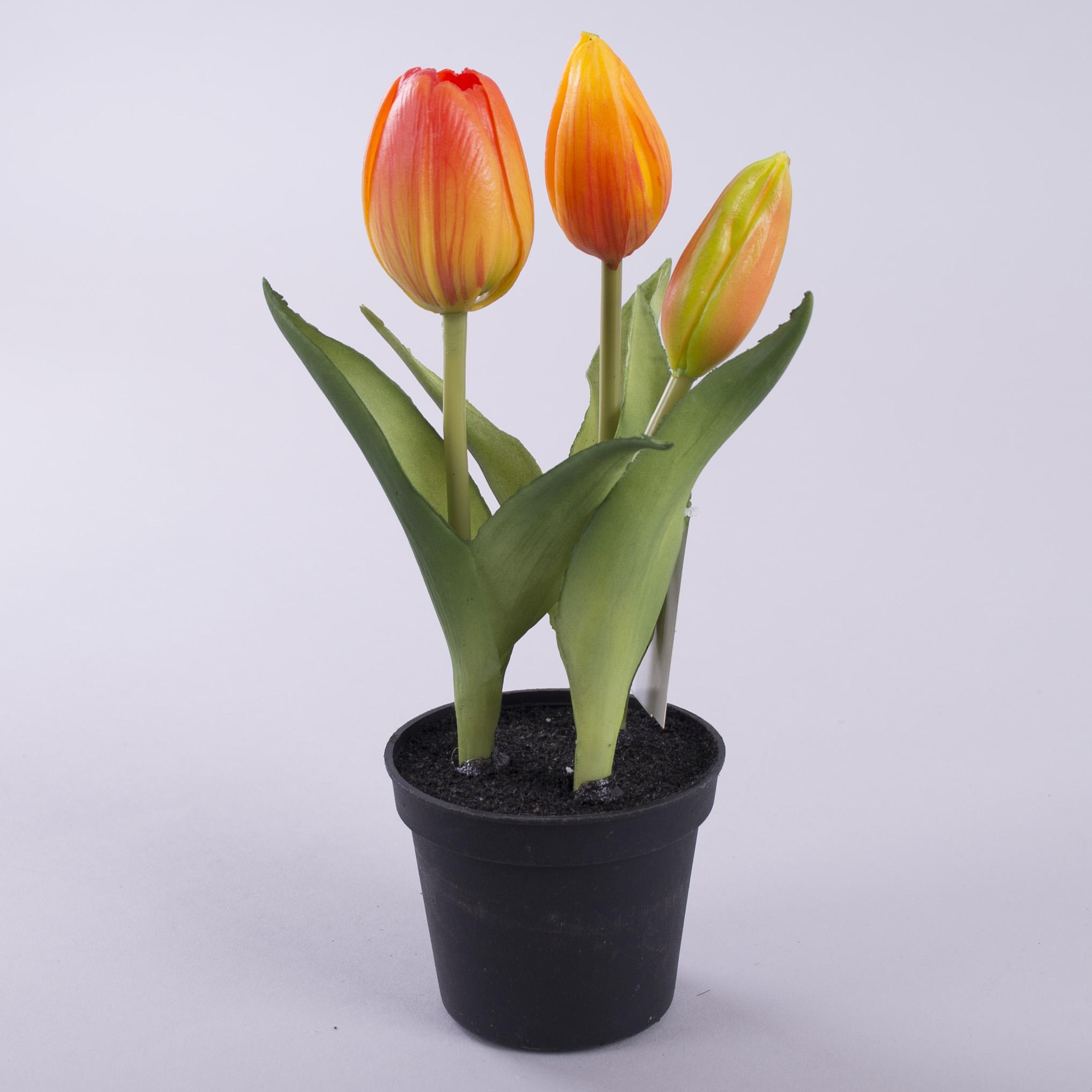 тюльпан латексний в горщику жовто-оранжевий