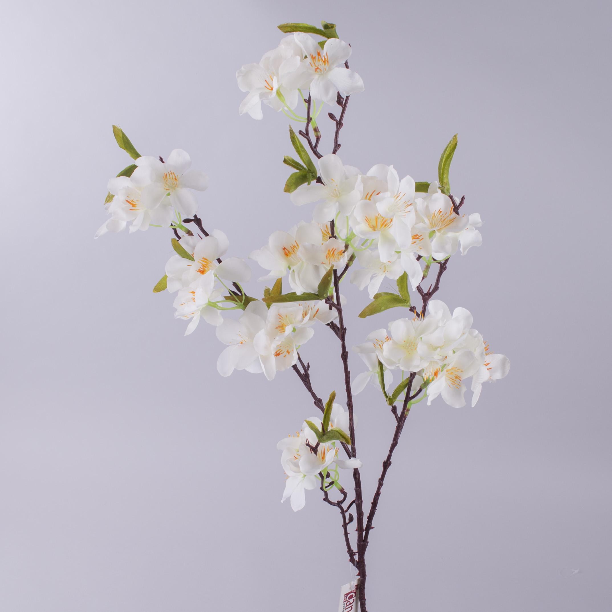 цвет яблони белый