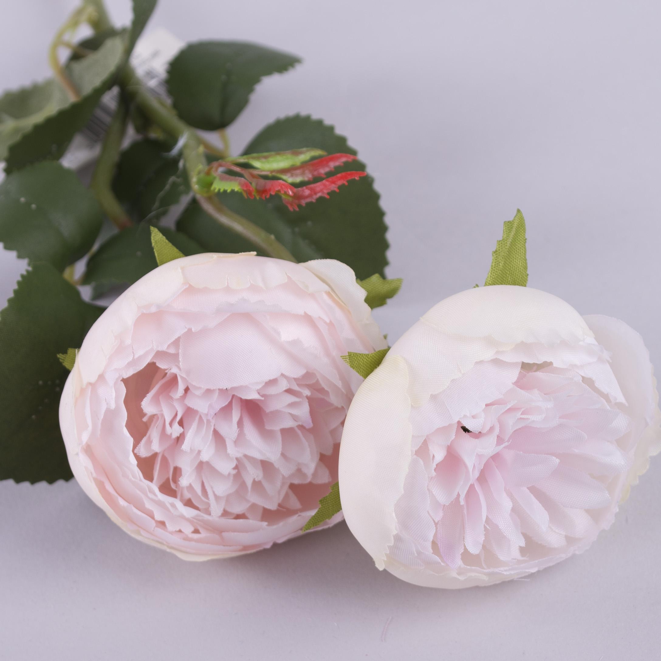"""Роза """"круглая садовая"""" розовая"""