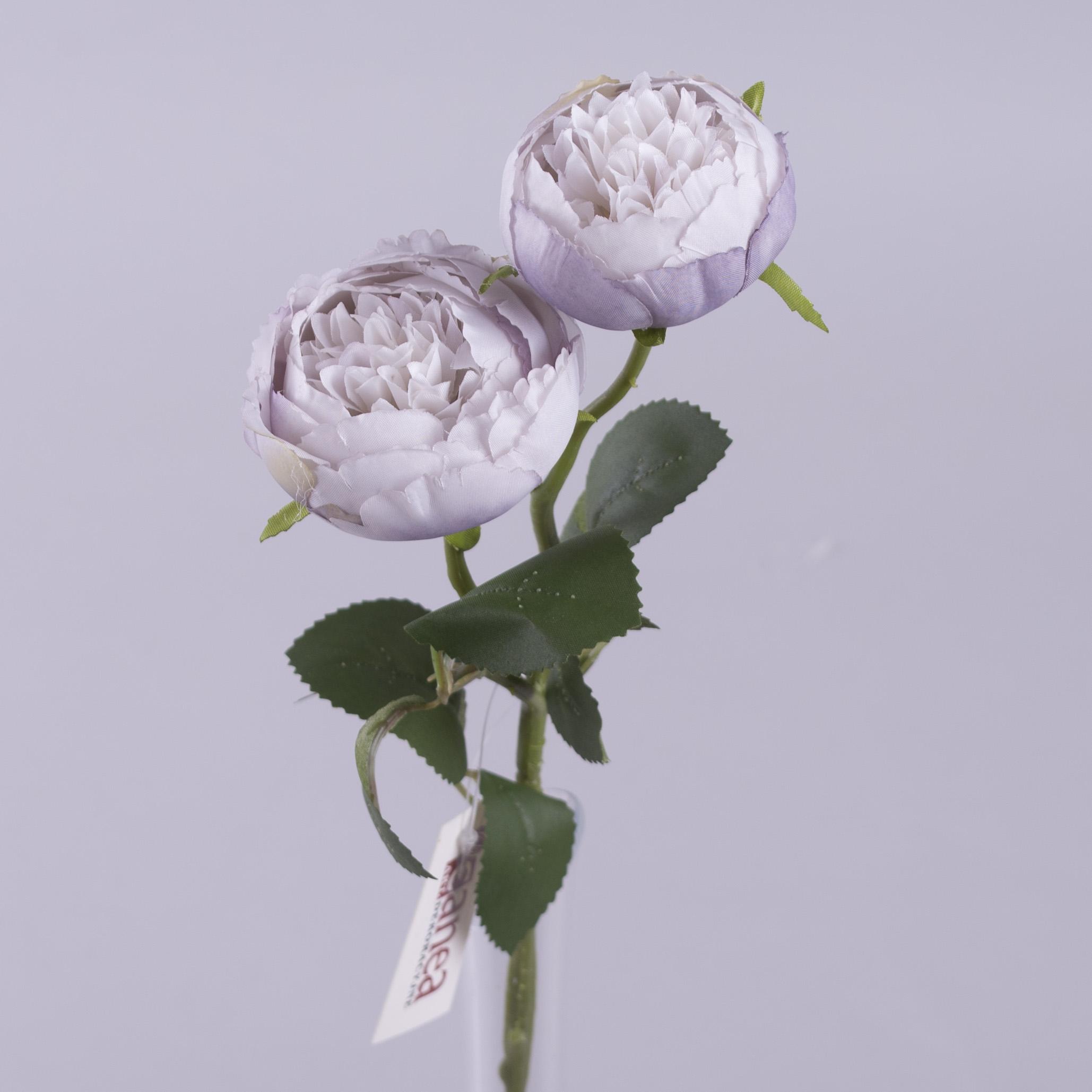 "Роза ""круглая садовая"" сиреневая"