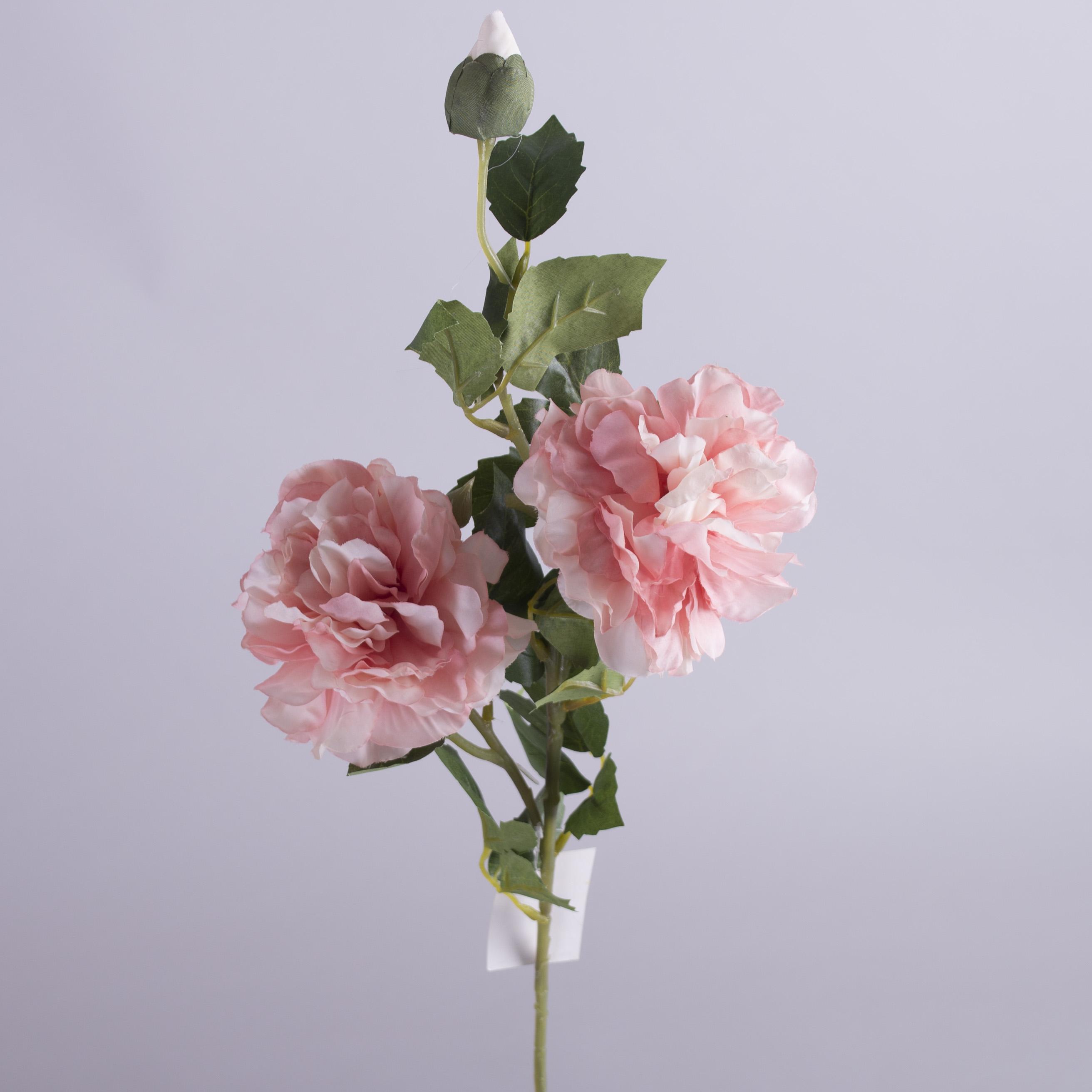 """роза английская """"шарик"""" (розовая)"""