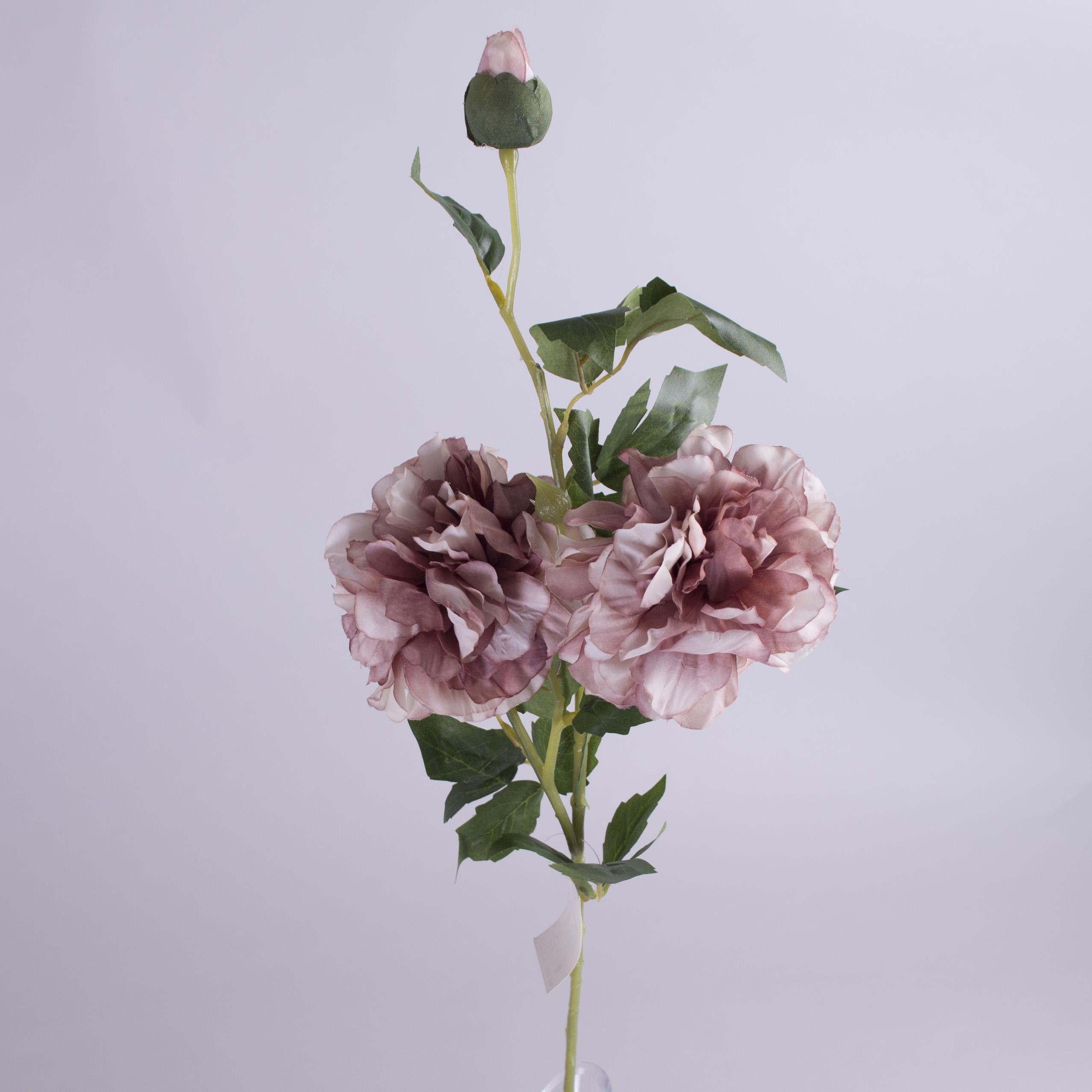 """роза английская """"шарик"""""""