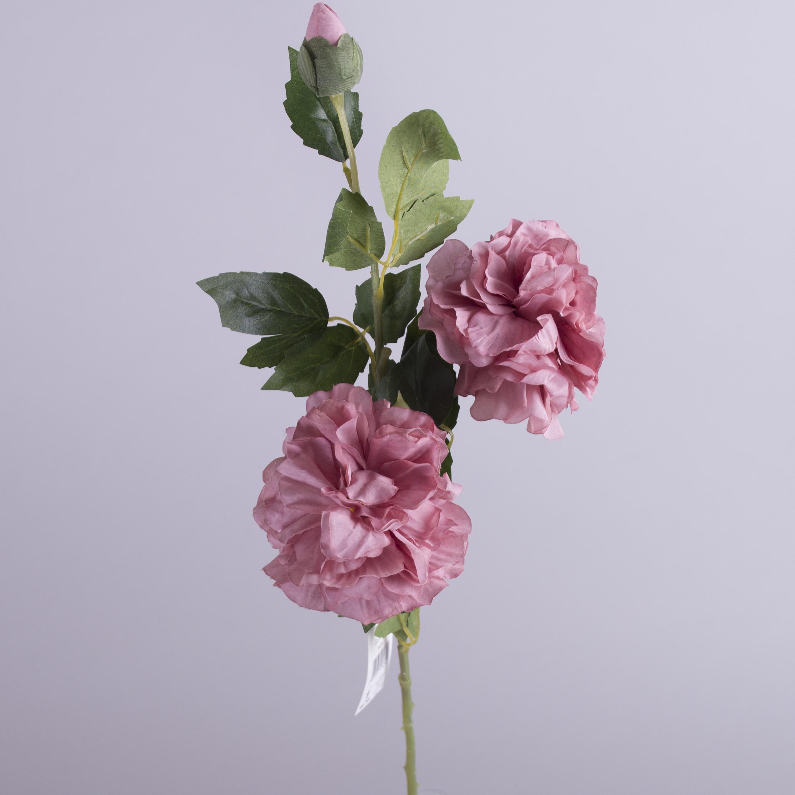 """роза английская """"шарик"""" (сливовая)"""