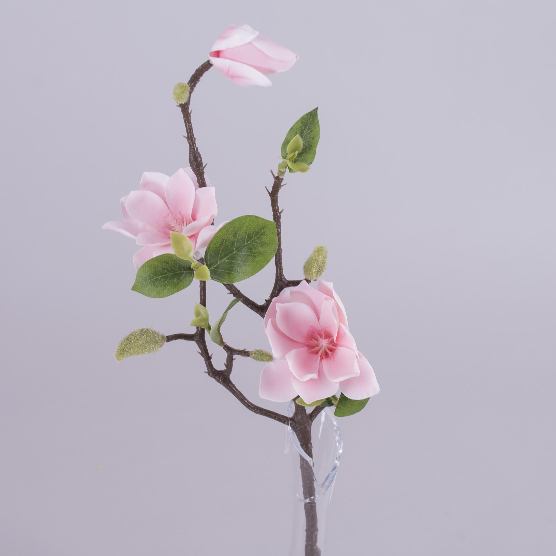 Магнолия короткая  нежно розовая