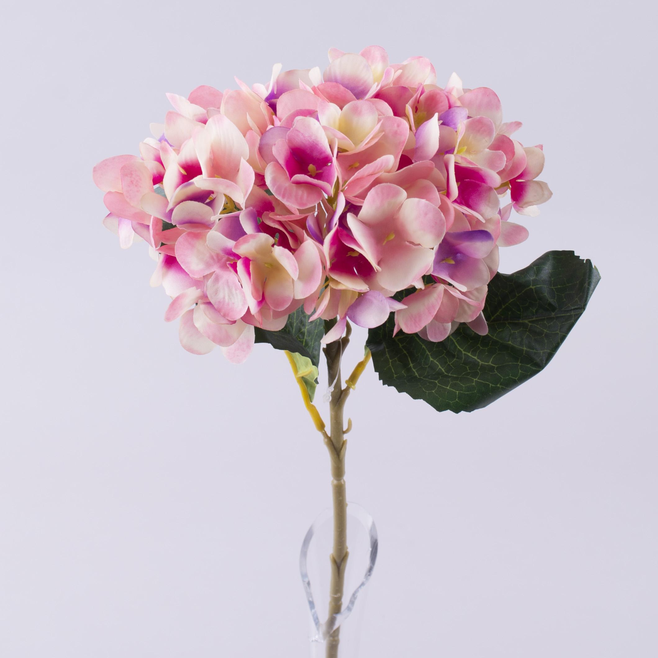 Гортензія рожева одинарна