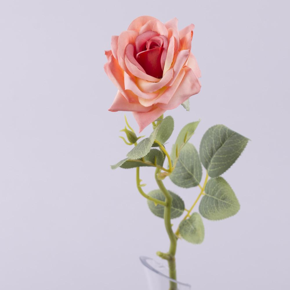 роза одинарная с острыми лепестками (персиковая)