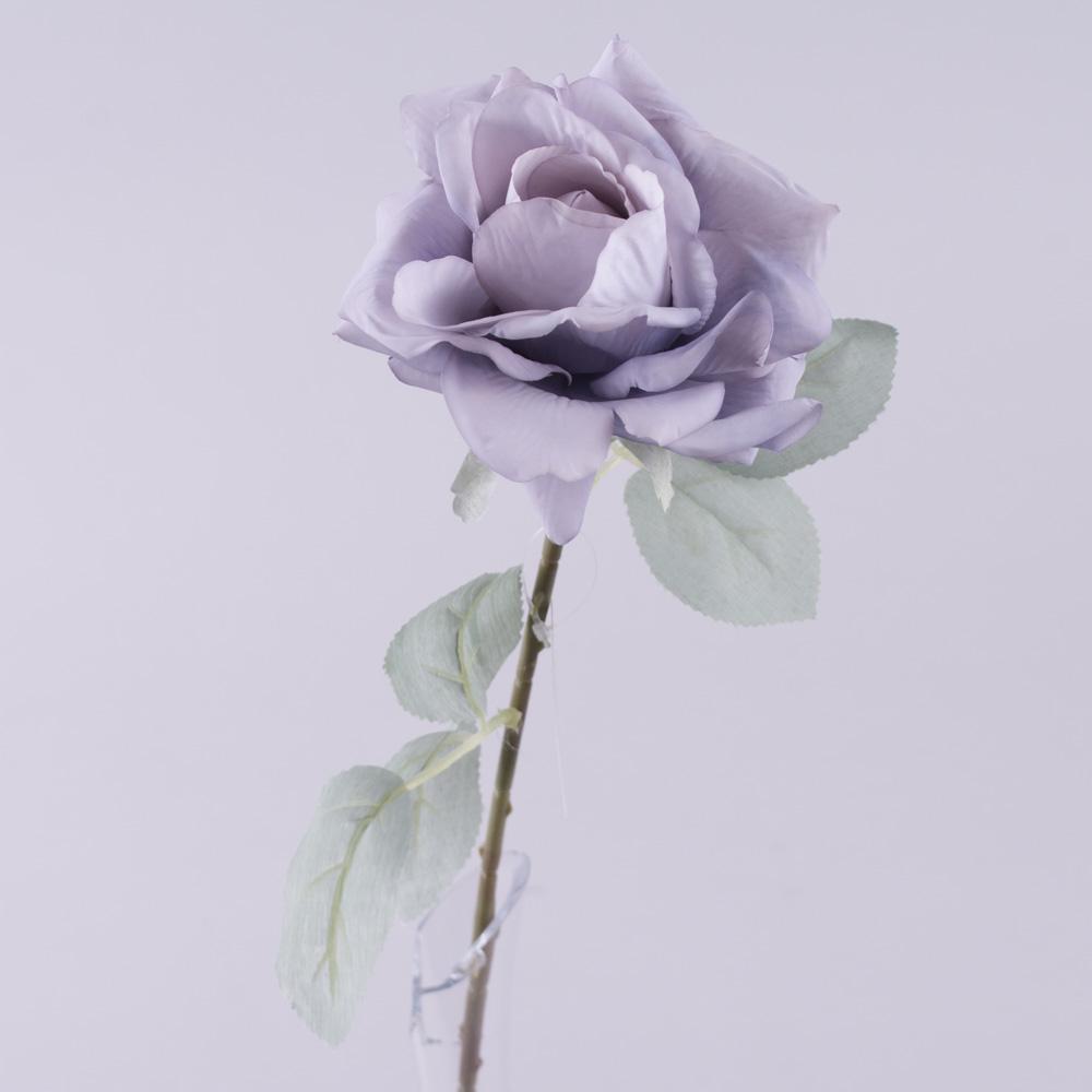 Роза остролистая с голубым листком (сиреневая)