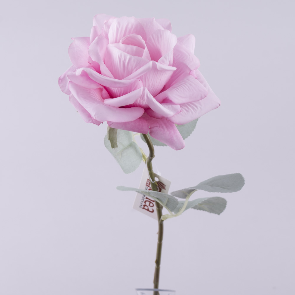 Роза остролистая с голубым листком (розовая)