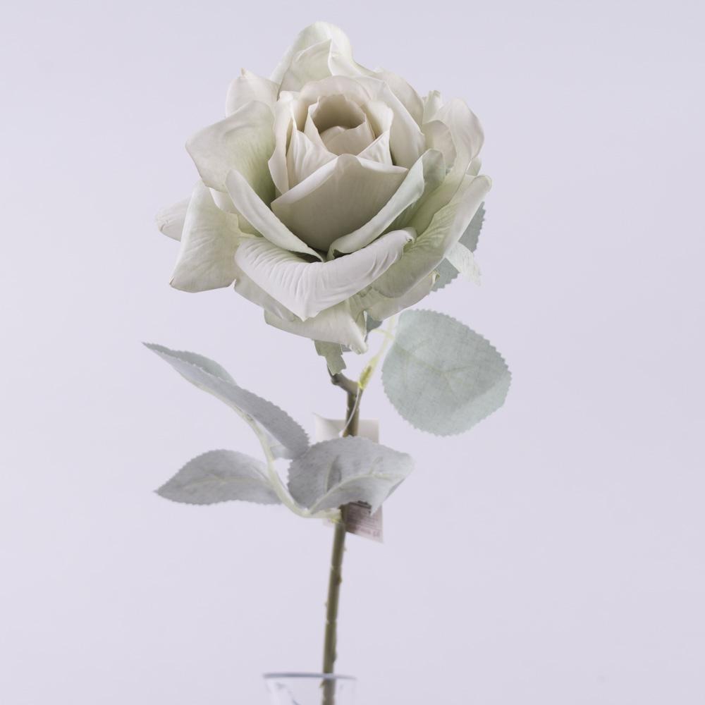 Роза остролистая с голубым листком (лазурная)