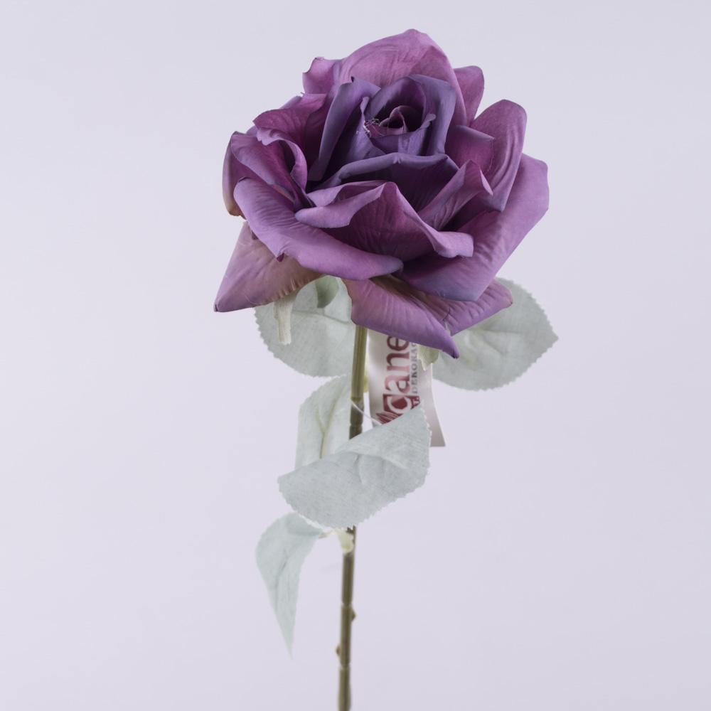 Роза остролистая с голубым листком (фиолетовая)