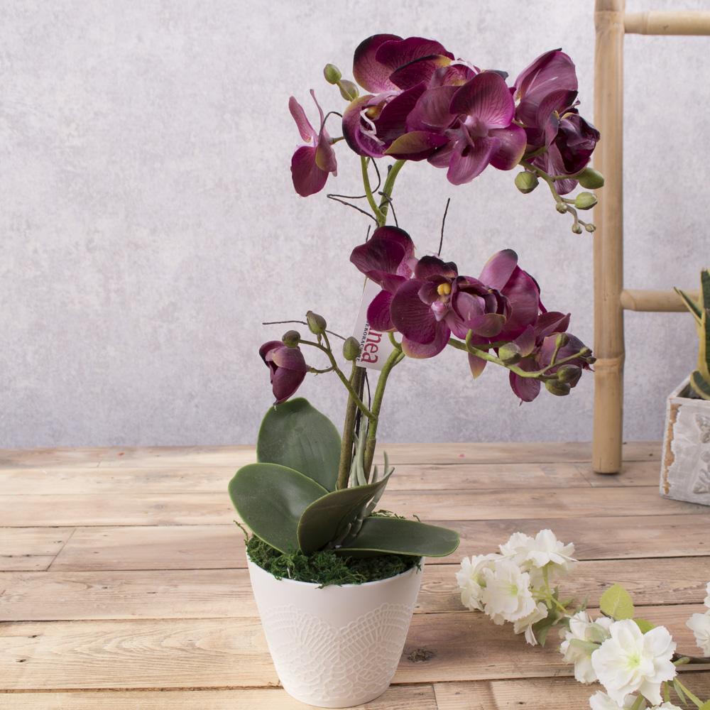 орхідея латексна в кашпо подвійна (бургунди)