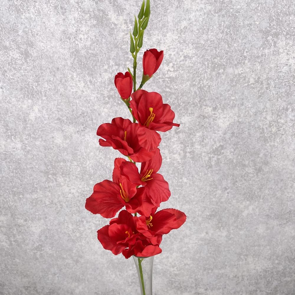 Гладиолус средний (красный)