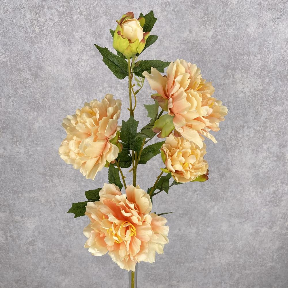 пион на 5 цветков пышный (персиковый)