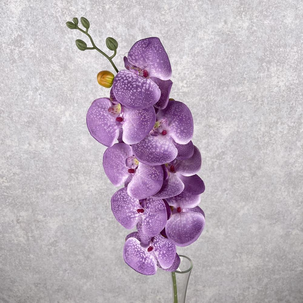 "орхидея ""мраморная"" фиолетовая"