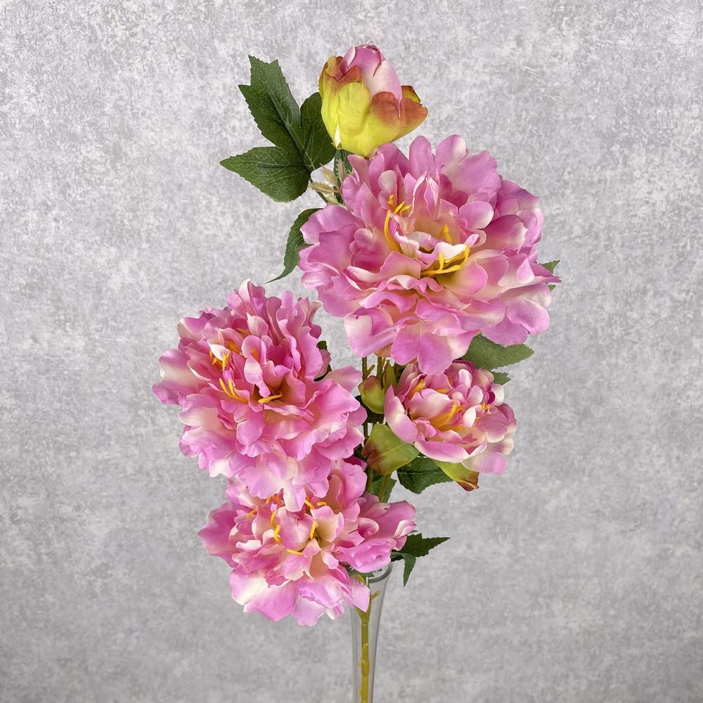 пион на 5 цветков пышный (розовый)