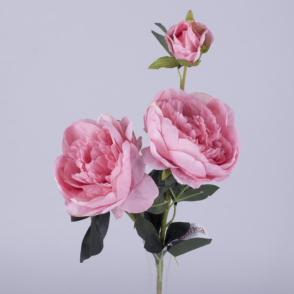 Пион 2 цветка и бутон розовый