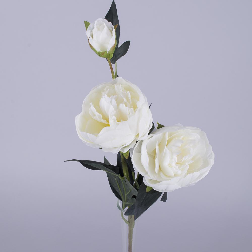 Пион 2 цветка и бутон белый