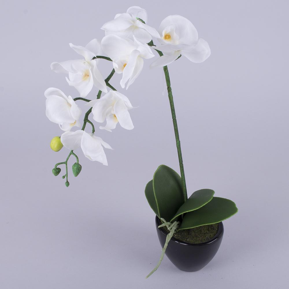 орхідея одинарна латексна в кашпо біла
