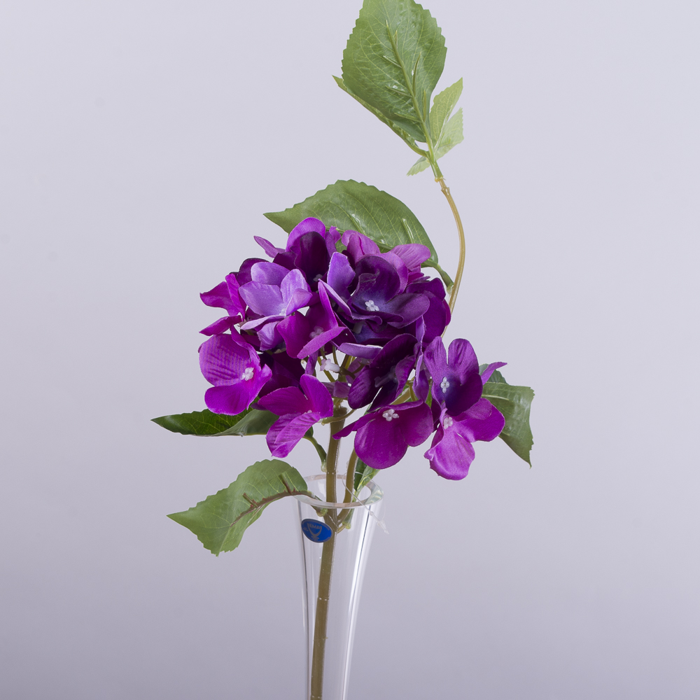 гортензія коротка з листком фіолетова