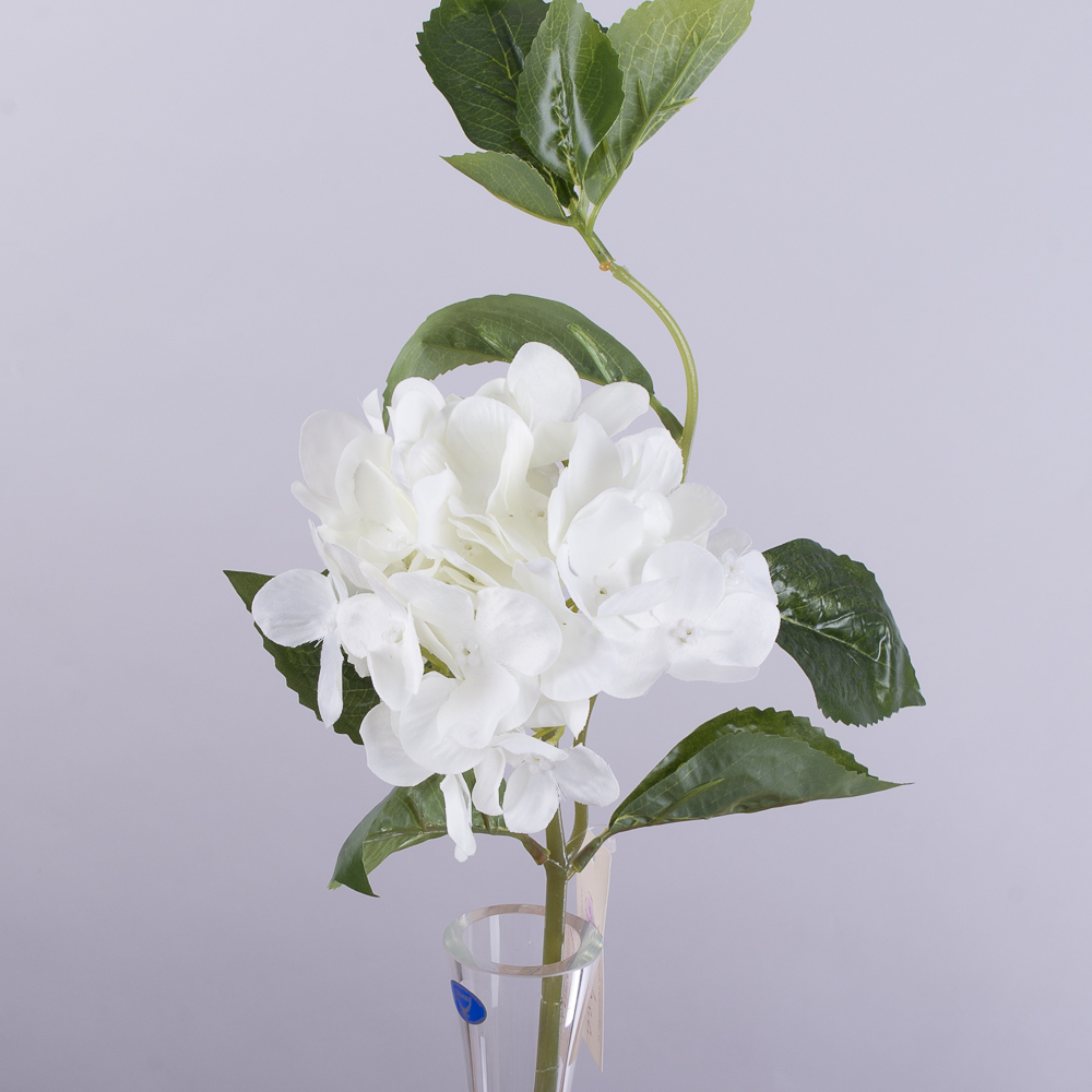 гортензія коротка з листком біла